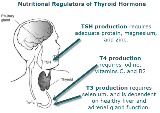 Weight Loss Nutritional Regulation Thyroid Hormones Iodine Potassium Iodide Potassium