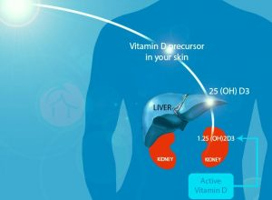 Feature Image for Vitamin D Blog Post