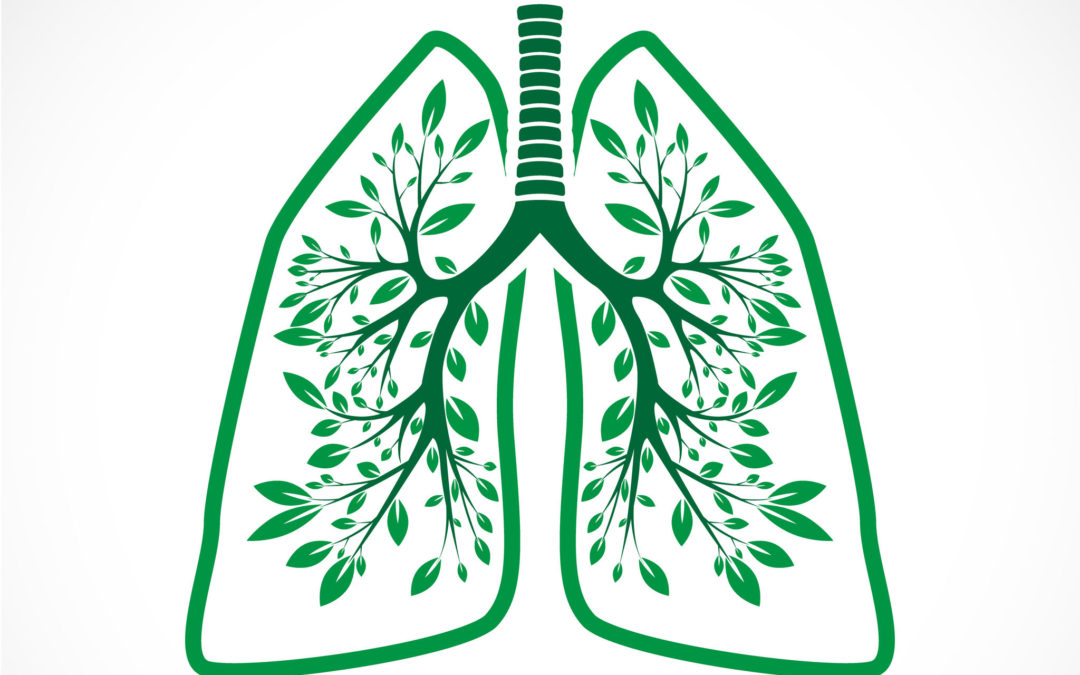 ~014~ Herbs for Respiratory Function